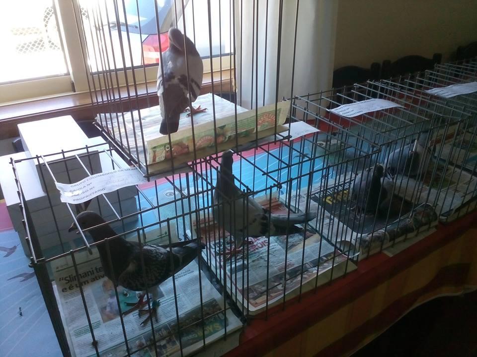 d os pombos